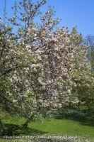 spaziergang-domgarten-speyer-fruehling-7